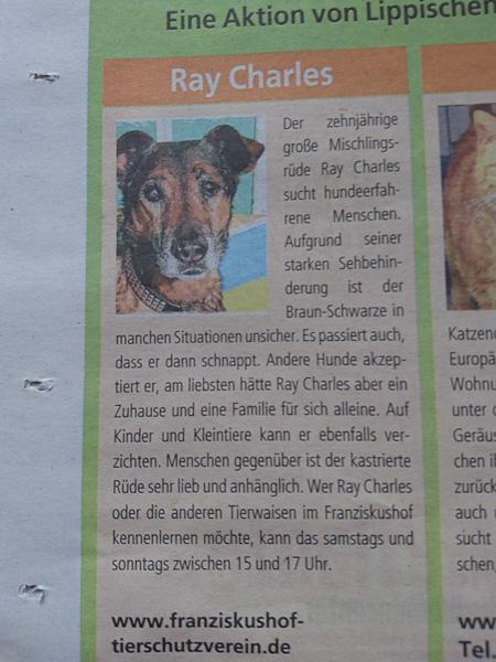 raycharlesdog